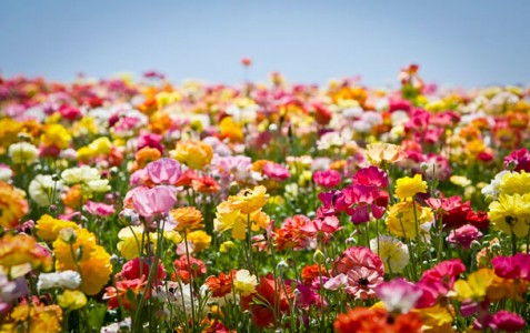 Įvairiausios gėlės